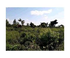 30Acres for sale in Kikyuusa ~ Zirobwe 5m
