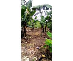PRIVATE MAILO LAND FOR SELL AT KATIKAMU WOBULENZI LUWERO