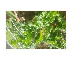 Organic Vegetables for sale