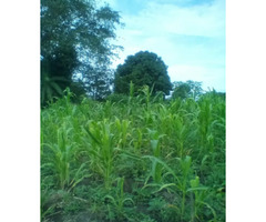 8 Acres Land In Magoma Nakaseke For Sale