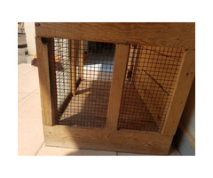 Dog and cat house and a leash
