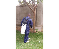 Fumigation, disinfection and pest control service