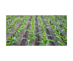 seeds, herbicides, fertilizers ,  insecticides and fungicides